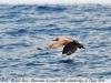 fishloc3matin27-04-13michaelrard-031